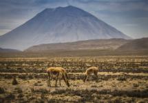 Caminhos Dos Andes